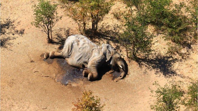Botswana Elefanten Sterben